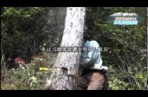 木曽川流域材PRビデオ